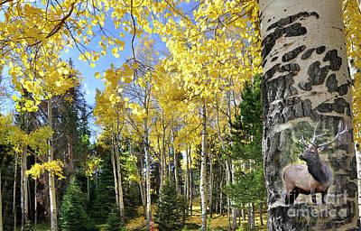 Photograph - Aspen Tree  by Nava Thompson