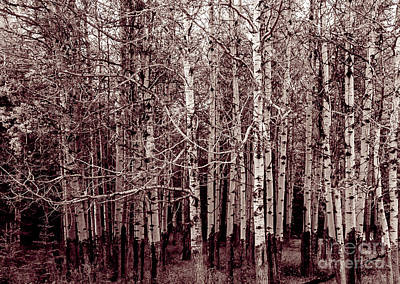 Photograph - Aspen Trees Canadian Rockies Duo Tone by Blake Webster