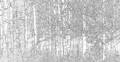 Photograph - Aspen Tree Wallpaper by Charlotte Schafer