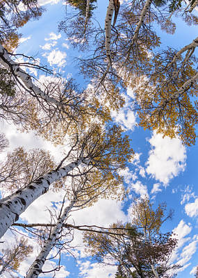 Photograph - Aspen Trees In Autumn With Dramatic Sky by Vishwanath Bhat