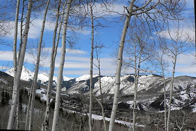 Aspen Trees In Snowmass Art Print