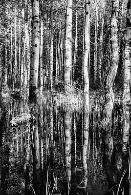 Photograph - Aspen Trees Reflection In Black And White by Vishwanath Bhat