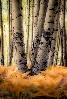 Photograph - Aspen Trees With Ferns by John Brink
