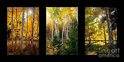 Photograph - Aspen Trio by Idaho Scenic Images Linda Lantzy