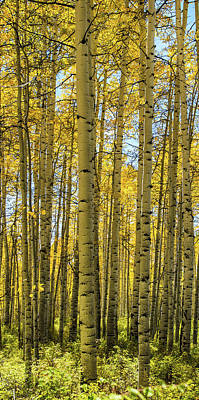 Photograph - Aspen Triptych Panel No. 2  by Bud Simpson