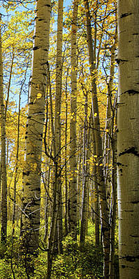 Photograph - Aspen Triptych Panel No. 3  by Bud Simpson