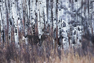 Digital Art - Aspen View 3 by Ernie Echols