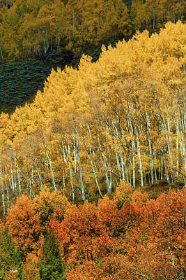 Photograph - Aspen Waves by Dana Sohr