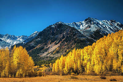 Photograph - Aspen Wilderness by Andrew Soundarajan