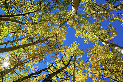 Photograph - Aspen With Sun Burst by Stephen Holst