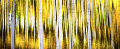 Photograph - Aspen Wonderland by Bjorn Burton