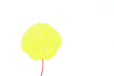 Aspen Yellow Art Print