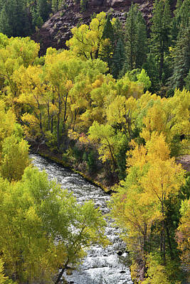 Photograph - Aspens Adorn San Miguel River by Ray Mathis