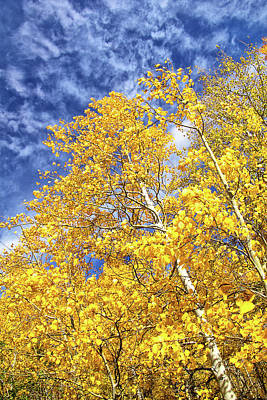 Photograph - Aspens Against The Sky by Carolyn Derstine