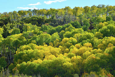 Photograph - Aspens Along Last Dollar Road by Ray Mathis