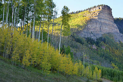 Photograph - Aspens Along Silverton To Durango Highway by Ray Mathis