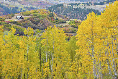 Photograph - Aspens And Oak Fall Colors On Last Dollar Road by Ray Mathis
