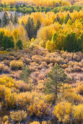 Photograph - Aspens And Pines II by Alexander Kunz