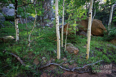 Photograph - Aspens And Stones by Richard Smith