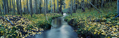 Aspen Leaf Photograph - Aspens And Stream In Uncompahgre by Panoramic Images