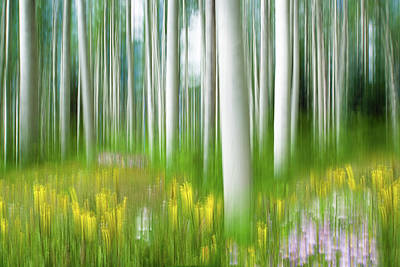 Photograph - Aspens And Wildflowers by Michael Blanchette