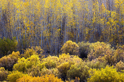 Photograph - Aspens And Willows In Fall by Alexander Kunz