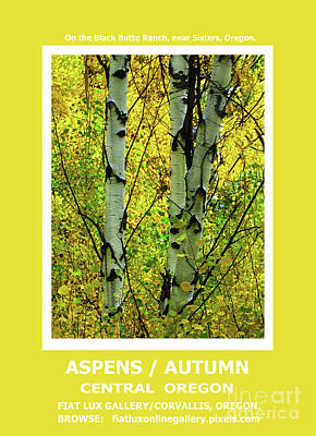 Black Butte Ranch Photograph - Aspens Autumn II by Michael Moore