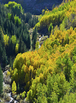 Photograph - Aspens Beneath The Silverton To Durango Highway by Ray Mathis