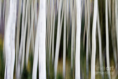 Photograph - Aspens In An Abstract Key  by Bryan Keil