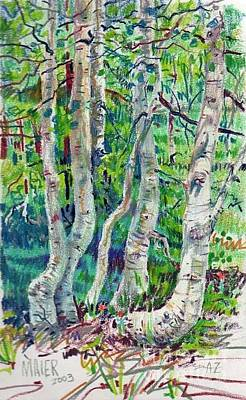 Pencil Drawing Drawing - Aspens by Donald Maier