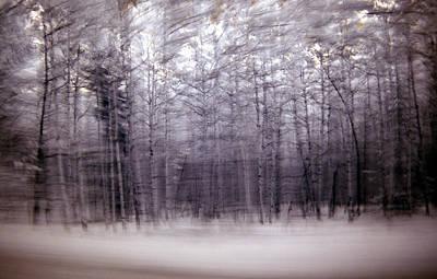 Photograph - Aspens Dreams by Thomas Bomstad