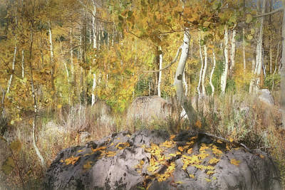 Photograph - Aspens Dressed For Fall by Donna Kennedy