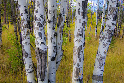 Print featuring the photograph Aspens by Gary Lengyel
