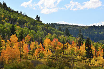 Photograph - Aspens Glow Along Highway 62 by Ray Mathis