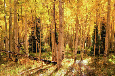 Photograph - Aspens Golden Glow by Donna Kennedy