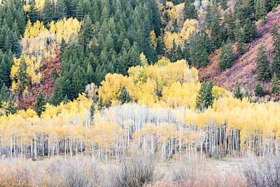 Photograph - Aspens In Aspen Colorado by Jemmy Archer
