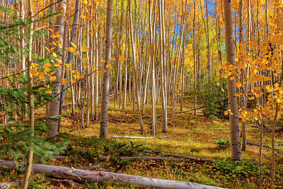 Photograph - Aspens In Autumn 12 - Santa Fe National Forest New Mexico by Brian Harig