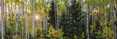 Aspens In Autumn 5 Panorama - Santa Fe National Forest New Mexico Art Print