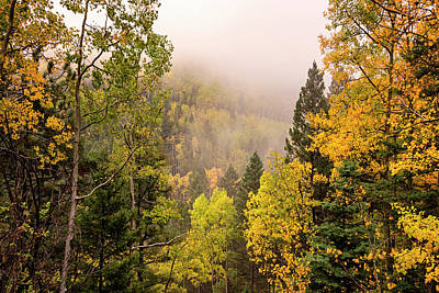 Photograph - Aspens In Autumn 9 - Santa Fe National Forest New Mexico by Brian Harig