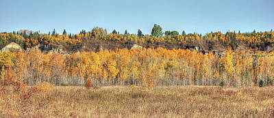 Photograph - Aspens In Autumn by Jim Sauchyn