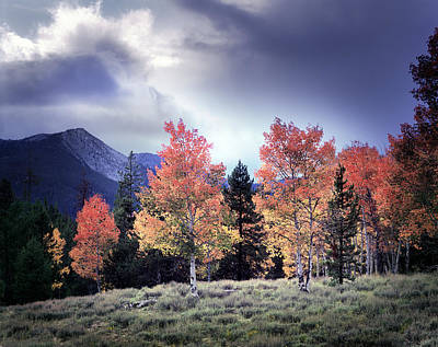 Of Artist Photograph - Aspens In Autumn Light by Leland D Howard