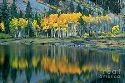 Aspens In Fall Color Along Lundy Lake Eastern Sierras California Art Print