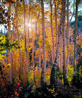 Photograph - Aspens In Fall Color by Jerome Obille