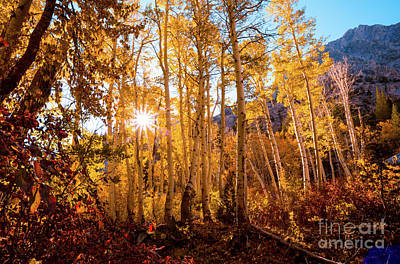 Photograph - Aspens In Fall Colors by Jerome Obille