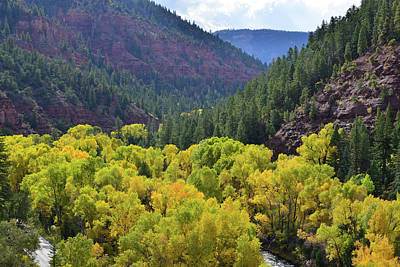Photograph - Aspens In Full Color Along Highway 145 And San Miguel River by Ray Mathis