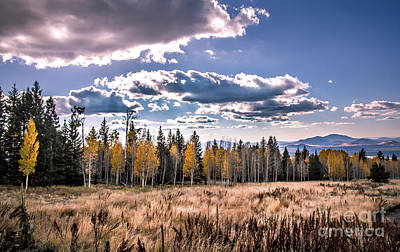 Photograph - Aspens In Line by Robert Bales