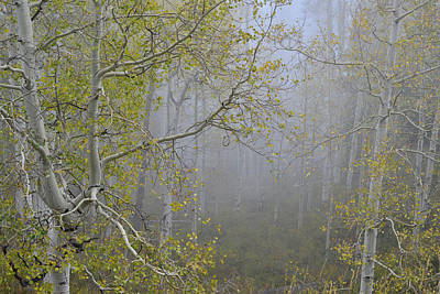 Photograph - Aspens In Low Clouds Along Dallas Creek by Ray Mathis