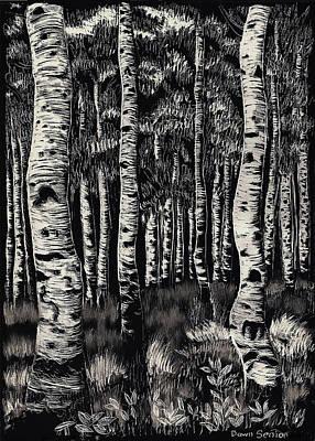 Aspens In Mountain Forest Original