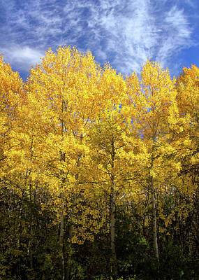 Photograph - Aspens In Sun And Shade by Carolyn Derstine