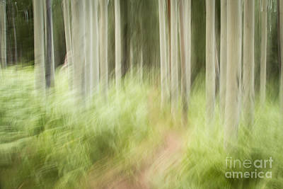 Photograph - Aspens In The Ferns by Marianne Jensen